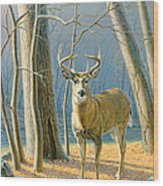 Pre-flight- Whitetail Buck Wood Print by Paul Krapf