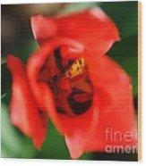 Pre-pollination  Wood Print