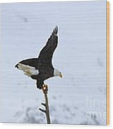 Precarious Perch Wood Print