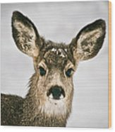 Precious - Mule Deer Fawn - Casper Mountain - Casper Wyoming Wood Print