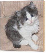 Precious Kitten Wood Print