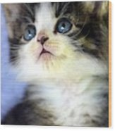 Precious Kitty Wood Print