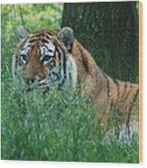 Predator In The Grass Wood Print