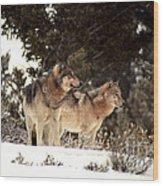Predators Wood Print