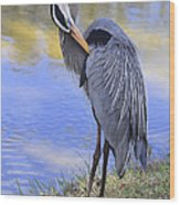 Preening By The Pond Wood Print