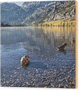 Preening Ducks At Silver Lake Wood Print