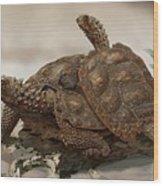 Prehistoric Turtles Wood Print
