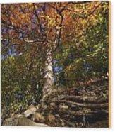 Preserve Trails In Fall Six Wood Print