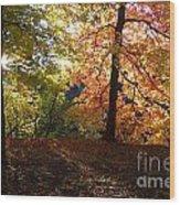 Preserve Trails In Fall Three Wood Print