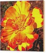 Prettiest Flower In The Garden Wood Print