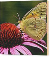 Pretty As A Butterfly Wood Print