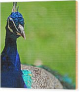 Pretty As A Peacock Wood Print