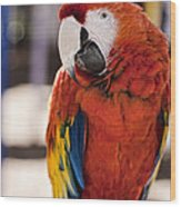 Pretty Bird 2 Wood Print