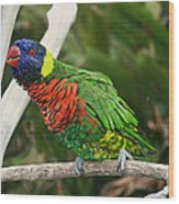 Pretty Bird Wood Print