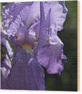 Pretty Blue Bearded Iris Wood Print