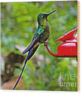 Pretty Blue-tailed Hummer In Mindo Wood Print