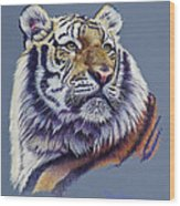 Pretty Boy Siberian Tiger Wood Print by Mary Dove