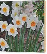 Pretty Daffodil Garden Wood Print
