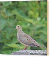 Pretty Dove Wood Print