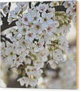 Pretty Flowering Trees Wood Print