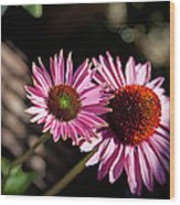 Pretty Flowers Wood Print by Joe Fernandez
