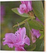 Pretty Fuschia Rhododendron Wood Print
