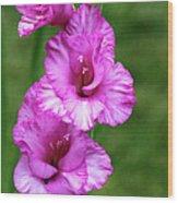 Pretty Gladiolus Wood Print