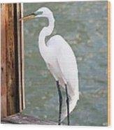 Pretty Great Egret Wood Print