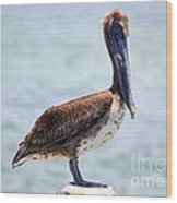 Pretty Gulf Pelican Wood Print