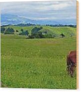 Pretty Horse Grazing In Rolling Hills Wood Print