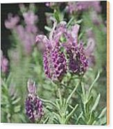 Pretty In Lavender I Wood Print