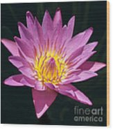 Pretty In Pink And Yellow Water Lily Wood Print