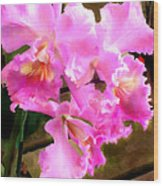 Pretty In Pink Cattleya Orchids Wood Print