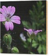Pretty In Pink Wood Print by Edward Hamilton