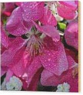 Pretty In Pink IIi Wood Print by Aya Murrells