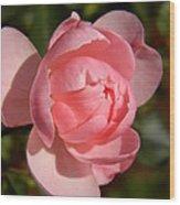 Pretty In Pink Rose Bud Wood Print