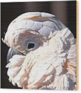 Pretty In Pink Salmon-crested Cockatoo Portrait Wood Print