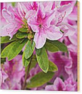 Pretty In Pink - Spring Flowers In Bloom. Wood Print