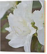 Pretty In White Azalea  Wood Print