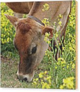 Pretty Jersey Cow Square Wood Print