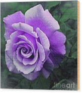 Pretty Lilac Rose Wood Print