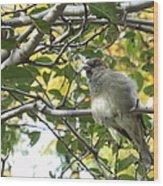 Pretty Little Bird Wood Print