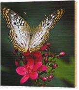 Pretty Little Butterfly  Wood Print