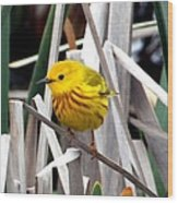 Pretty Little Yellow Warbler Wood Print