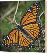 Pretty Monarch Wood Print