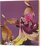 Pretty Orchid On Pink Wood Print
