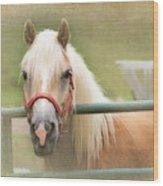 Pretty Palomino Horse Photography Wood Print