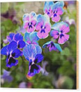 Pretty Pansies 2 Wood Print