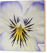 Pretty Pansy Close Up Wood Print by Natalie Kinnear