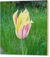 Pretty Pastel Tulip Wood Print